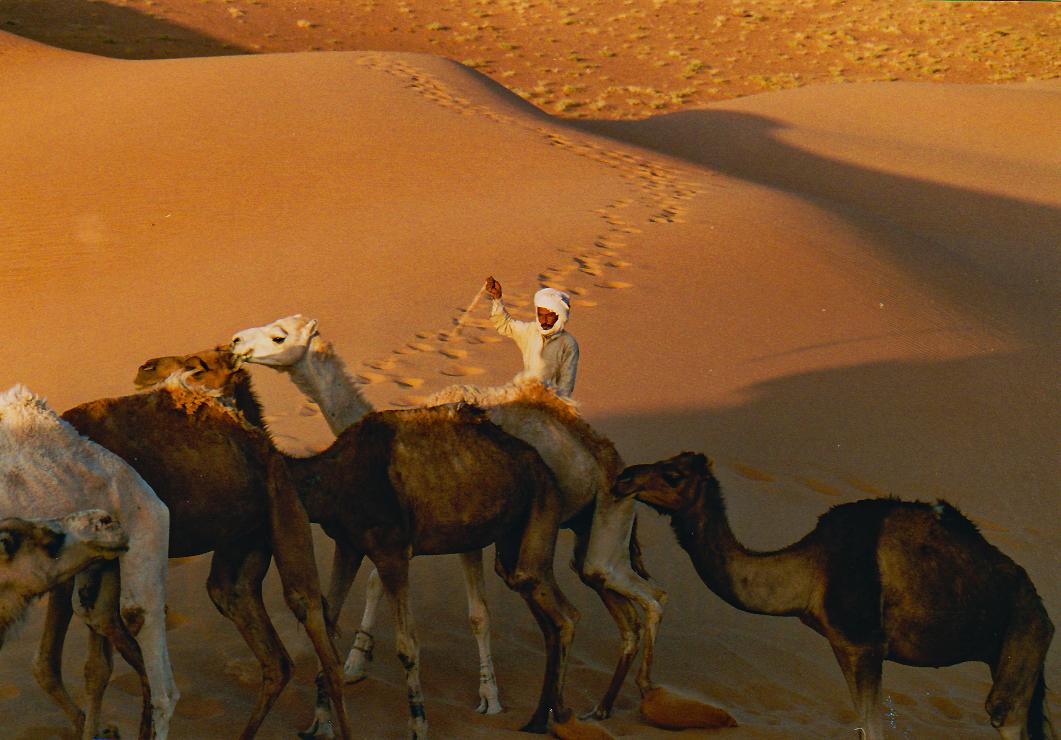 Le matin dans le désert